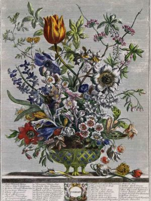 Robert--Furber-Twelve-Months-of-Flowers-february-1770