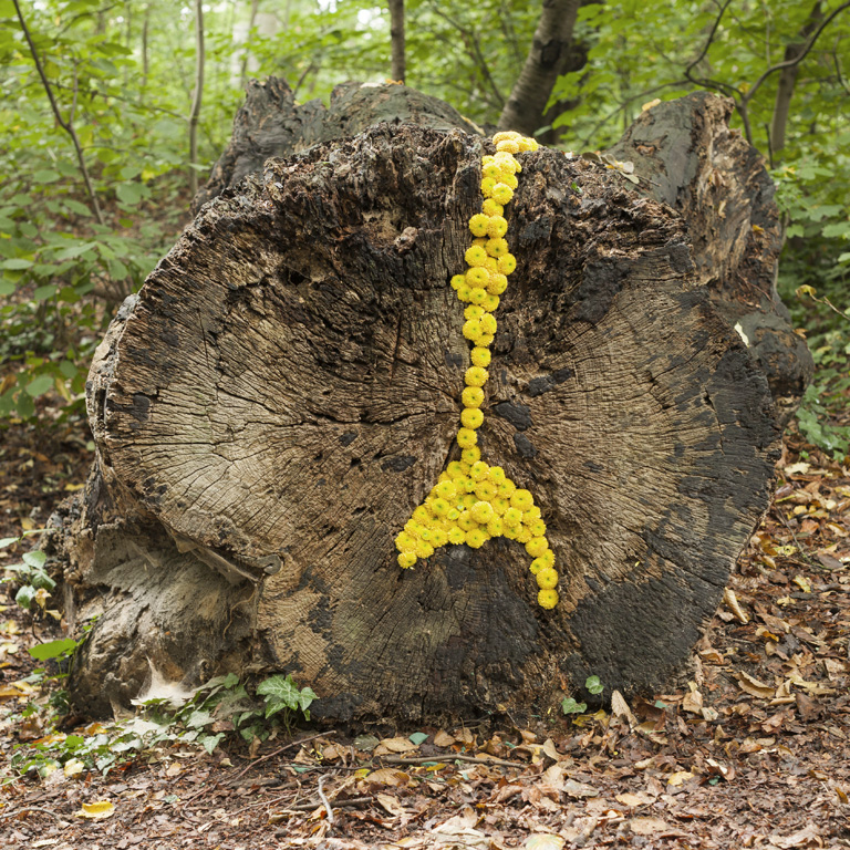 floral art 1-art végétal-land art-contemporain- souche 08-2015